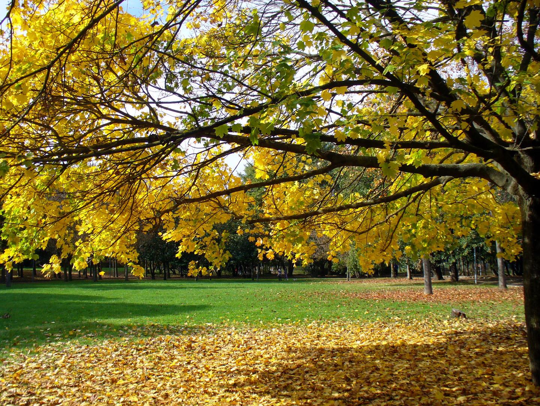Riccione autunno 1