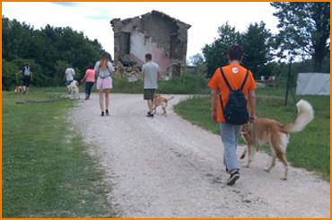 Cani sordi e ciechi trovano una nuova vita a Gradara con Abbaio Camp