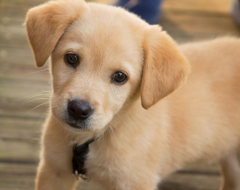 Riccione si candida a capitale delle vacanze pet friendly
