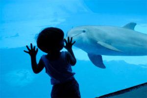 Notti intorno al fuoco e tra i delfini a Oltremare - Il Titolo