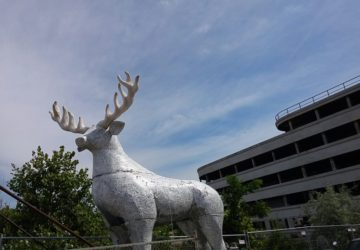 Rimini, alla Novarese spunta una renna ma è il party Jägermeister Nightcall